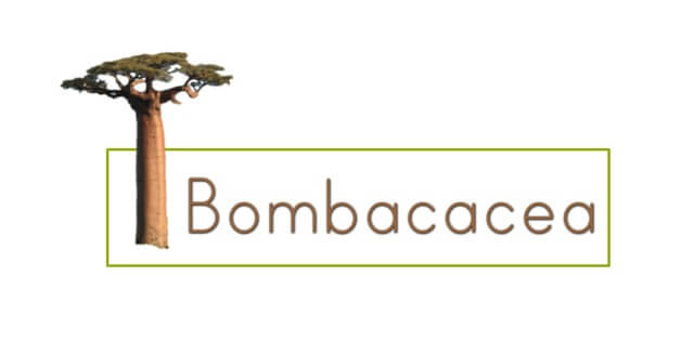 BOMBACACEA COLOMBIA.